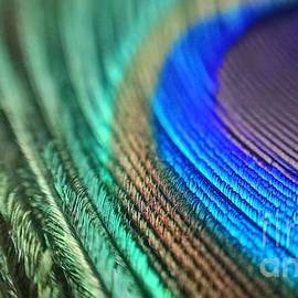 Jaimin Panchal - Magnification Color Of Peacock Wing