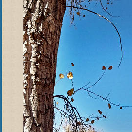 Gretchen Wrede - Magnificent Cottonwood Bark and Amber and Turquoise