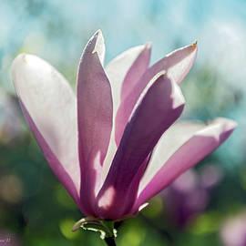 Brian Wallace - Magnolia Blossom
