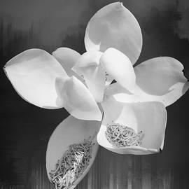 Magnolia En Noir by Alice Gipson