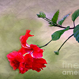 Diann Fisher - Majestic Hibiscus Bloom