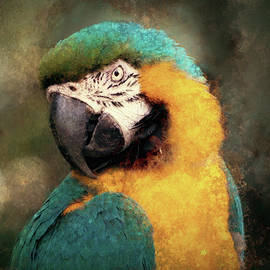Susan Maxwell Schmidt - Majestic Macaw