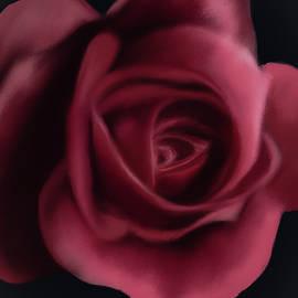 Majestic Pink Rose by Michele Koutris