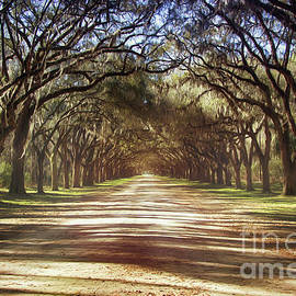 Tom Gari Gallery-Three-Photography - Majestic Rural Avenue