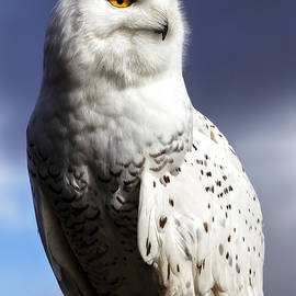Majestic Snowy by Wes and Dotty Weber