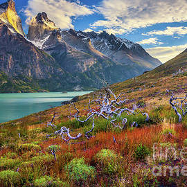 Majestic Torres del Paine by Inge Johnsson