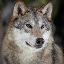 Athena Mckinzie - Majestic Wolf II