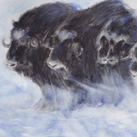 Majestical herd of Buffaloes. by Naike Jahgan