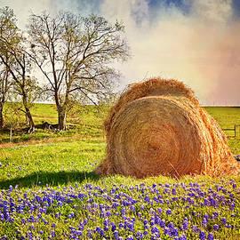 Lynn Bauer - Make Hay While the Sun Shines