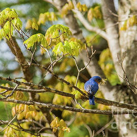 Alana Ranney - Making a nest