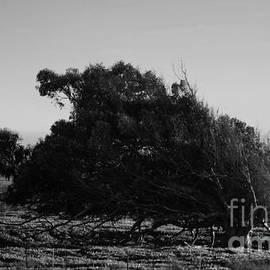 Malformed Treeline by Clayton Bruster