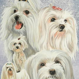 Maltese Collage by Barbara Keith