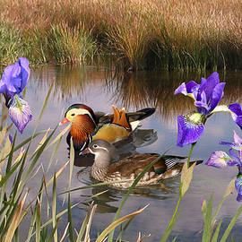 Mandarin Ducks and Wild Iris by Spadecaller