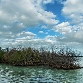 Mangroves In Key West Damaged By The Storm by Bob Slitzan