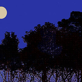 Mangroves in the Moonlight by Claudia O'Brien