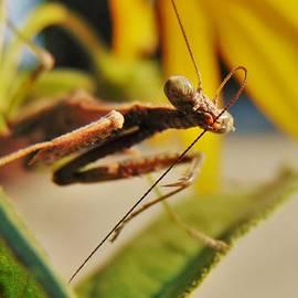 Honey Behrens - Mantis  Maintenance