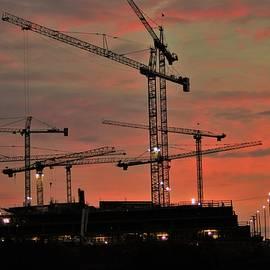 Many Cranes by Buddy Scott