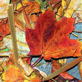Maple Leaf And Ribbon  by Mary ann Barker