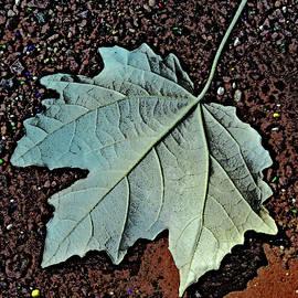 Andy Za - Maple leaf.