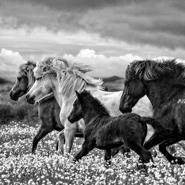March of the Mares by Joan Davis