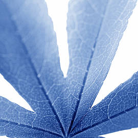 Marco Leaf Blue Vertical by Jennie Marie Schell