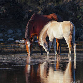 Jerry Cowart - Mare And Colt Reflection