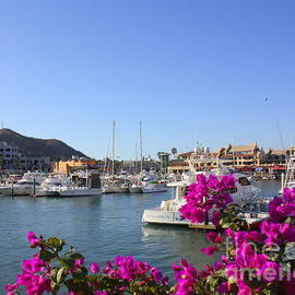 Marina Cabo San Lucas by Charlene Cox