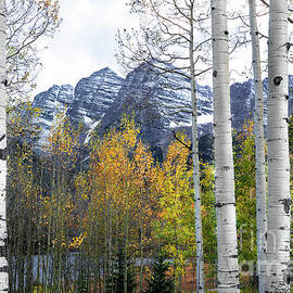 The Forests Edge Photography - Diane Sandoval - Maroon Bells - The Aspen View