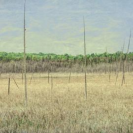 Marshland by Andrew Wilson