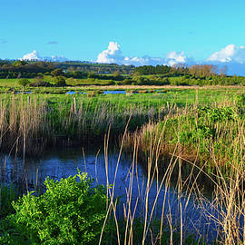 Marshland Vista by Rob Chiverton