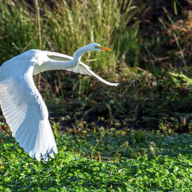 Marshy Flight  by Kevin Dietrich