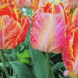 David Millenheft - Marthas Vineyard Tulips