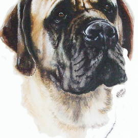 Mastiff in Watercolor by Barbara Keith