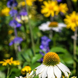 Steven Sparks - May Flowers