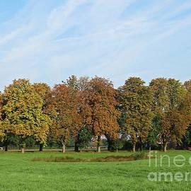 Meadow Near Telgte by Chani Demuijlder