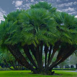 Art Spectrum - Mediterranean Palm Tree