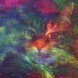 Meow Meow-A Maine Coon Cat by Mike Breau