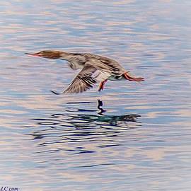 LeeAnn McLaneGoetz McLaneGoetzStudioLLCcom - Merganser Duck Takeoff