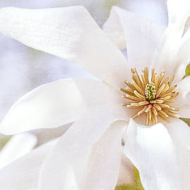 Merrill Magnolia Bloom by Julie Palencia