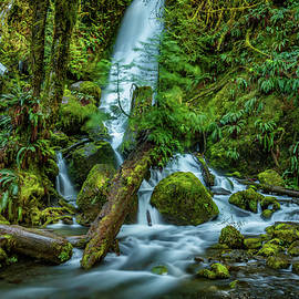 Merriman Falls 21 Lake Quinault by Mike Penney