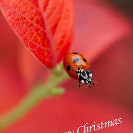 Mickey At Rawshutterbug - Merry Christmas