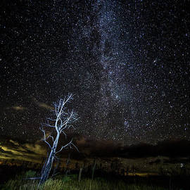 Mes Verde Stars - Twenty Two North Photography