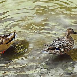 Mesmerizing Mallards