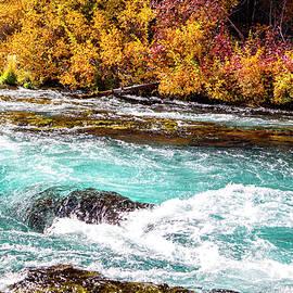 Metolius River by David Millenheft