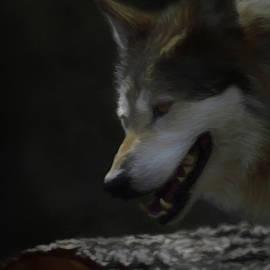 Ernie Echols - Mexican Grey Wolf DA