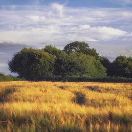 Mid Summer Cereal Field - Chris Fletcher