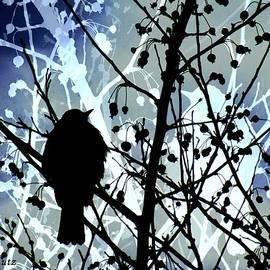 Kelly Schutz - Midnight Bird