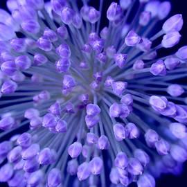 Devis Martusevicius - Midnight flower