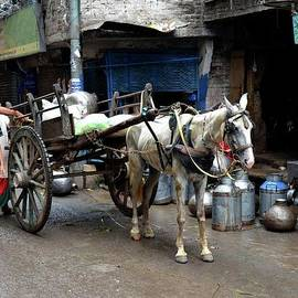 Milkman delivers fresh milk on horse carriage in walled city Lahore Pakistan