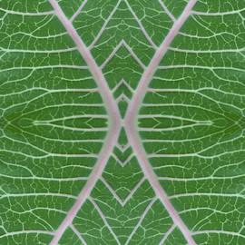 Milkweed Veins Quad by Paul Rebmann
